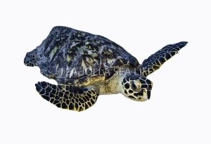 Bonaire Turtle on White Background (1)-2.jpg
